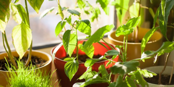 Merits of Indoor Gardening (Part 2 of 3)