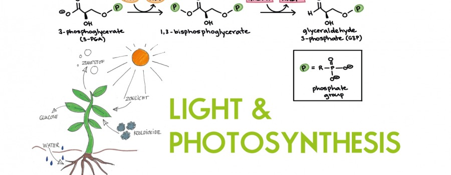 The (Important) Role of Green Light in Photosynthesis